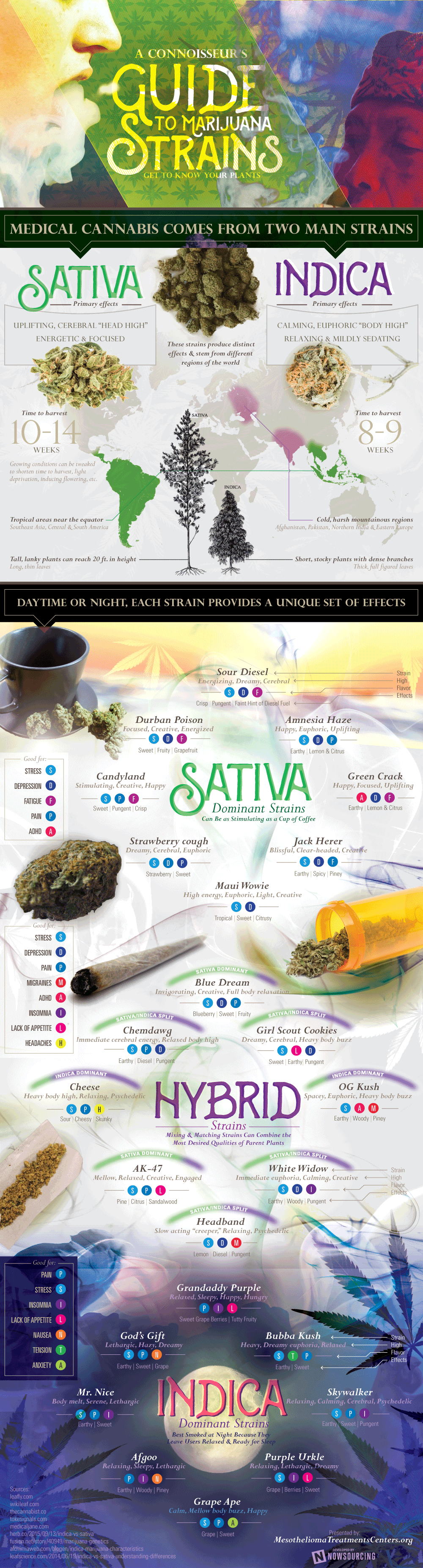 Guide to Knowing Marijuna Strains [Infographic]