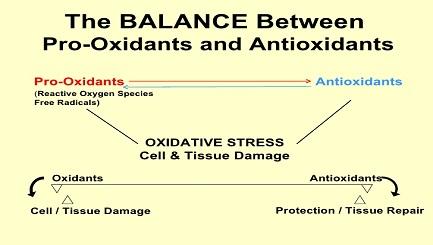 pro-oxidants-vs-antioxidants-cancer